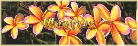 Weefels: le forum tahitien